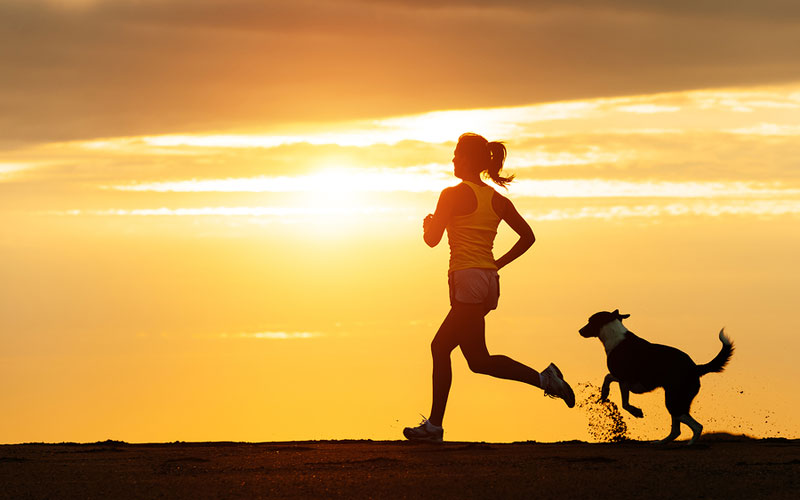 Pet Energy and Exercise