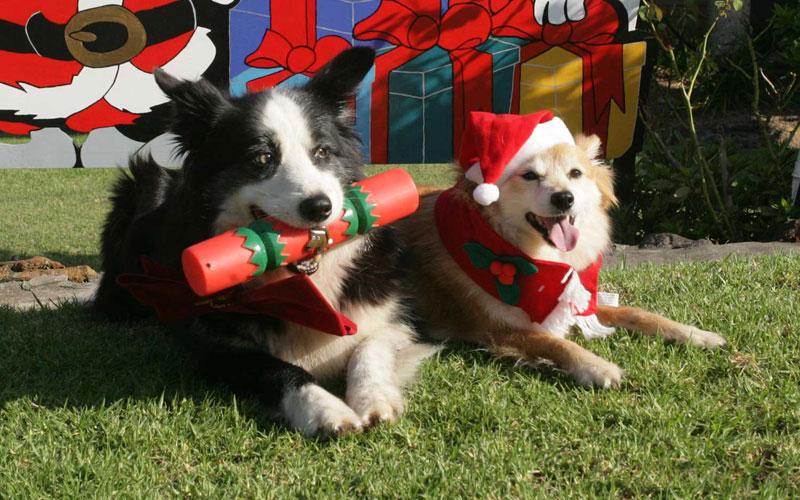 A Very Aussie Christmas
