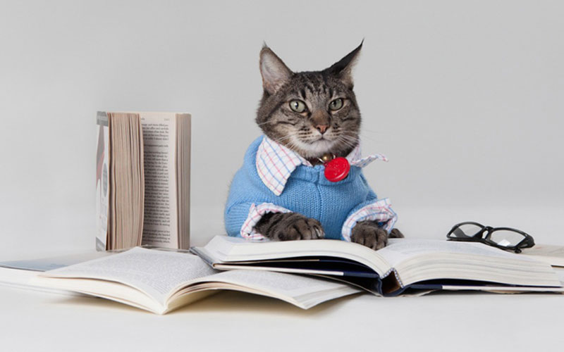 Feline Training Tips