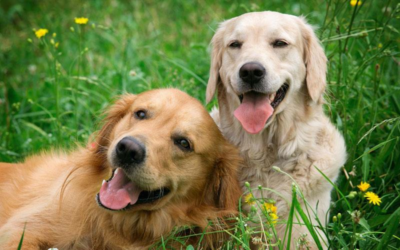 11 ways to make your dog smile