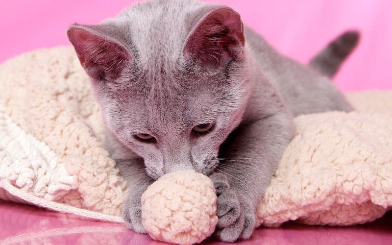 Easy as Kitten Play