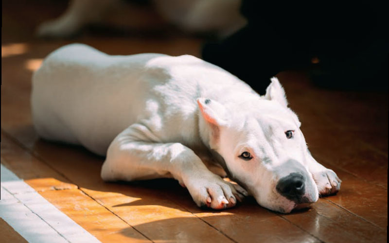 Sun Smart Pets