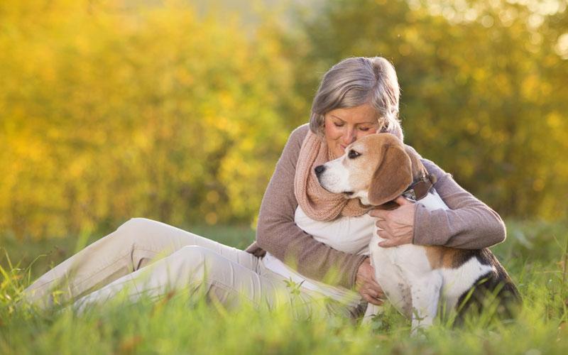 Mature Dogs For Adoption Australia