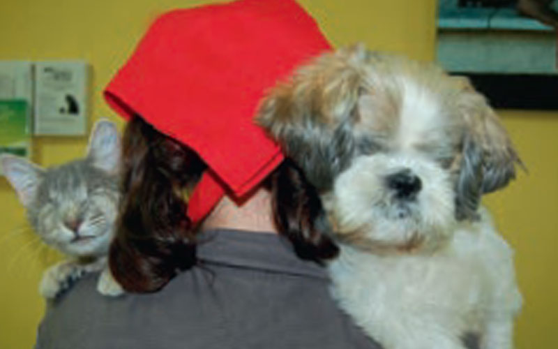 A Rescue Story From Animal Welfare League of Queensland