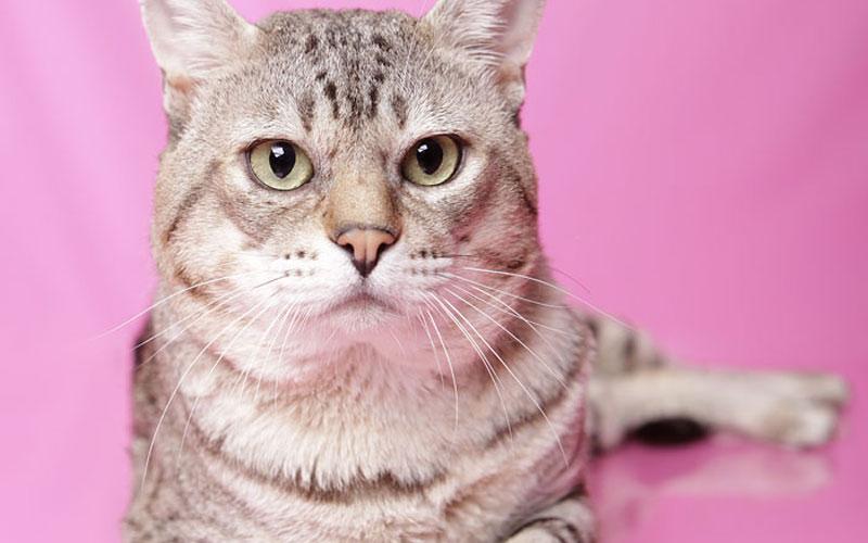 Feline Rescue Checklist