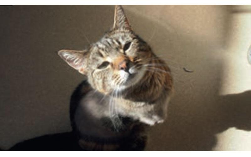 Meet Jaffa at Cat Protection Society of NSW