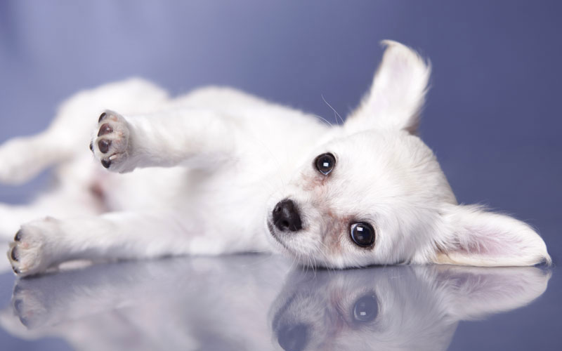 Top Pet Rescue Tips