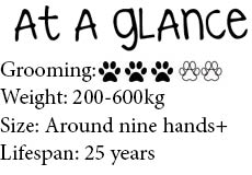 At a glance Pinto Horse