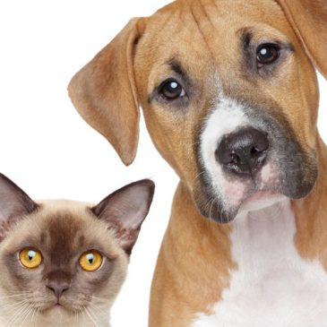 How much do you know about fleas and ticks?