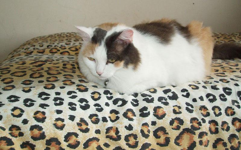 Comfy Cat Beds