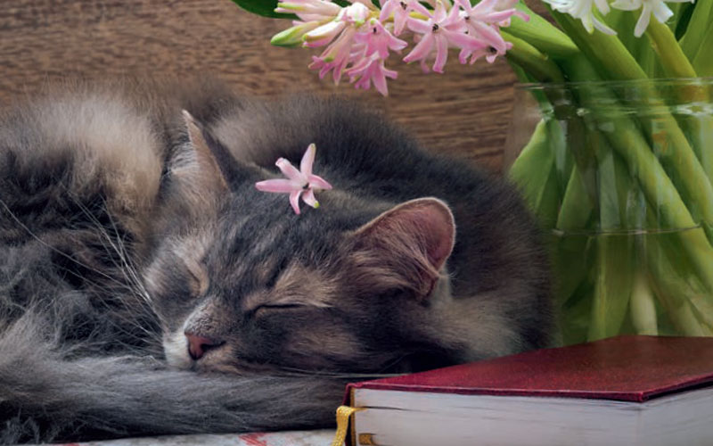 Plants that can kill your cat