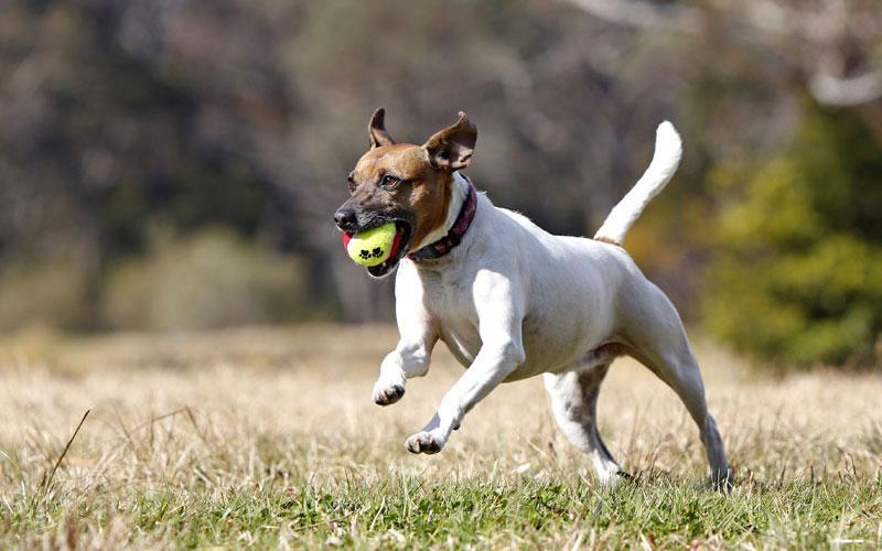 Healthy Pet Habits