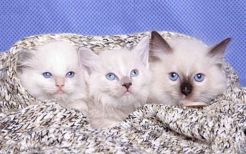 Winter Cat Care