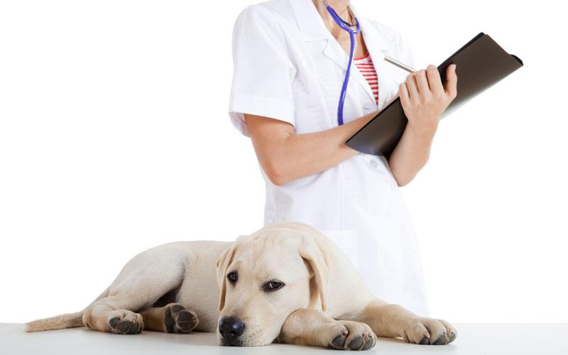 Pet vaccine updates
