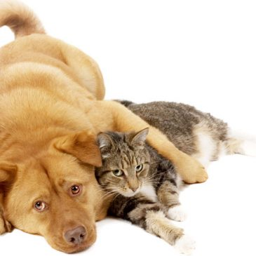 Are you more cat or dog?