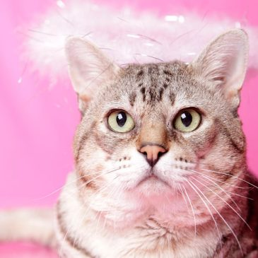 How diva-licious is your cat?