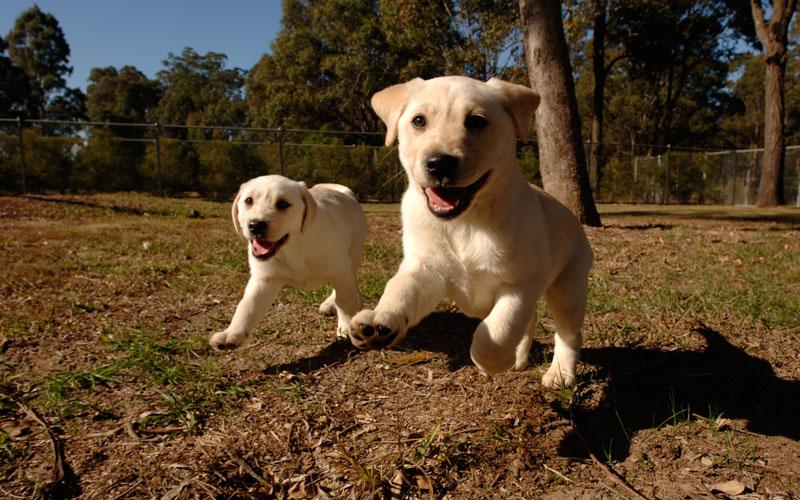 PETstock National Pet Adoption Day