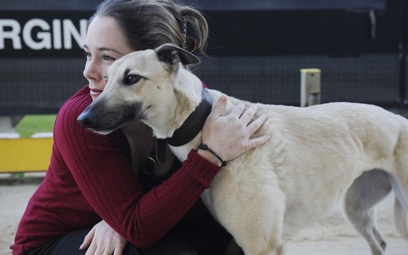 Happy Greyhounds