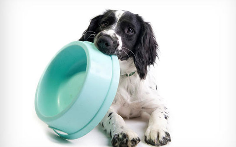 Making changes to your dog's diet