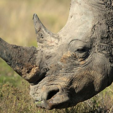 How much do you know about endangered animals?