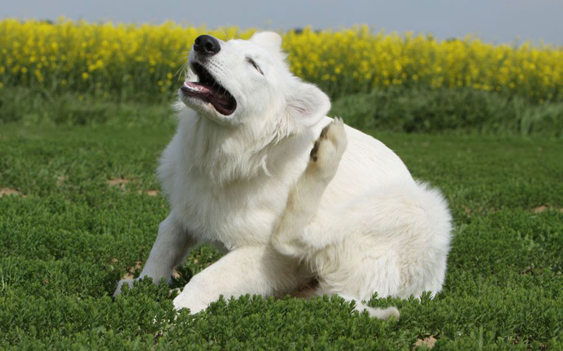 How to ease your dog's itchy skin