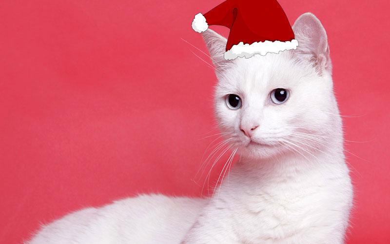 PETS' letter to Santa