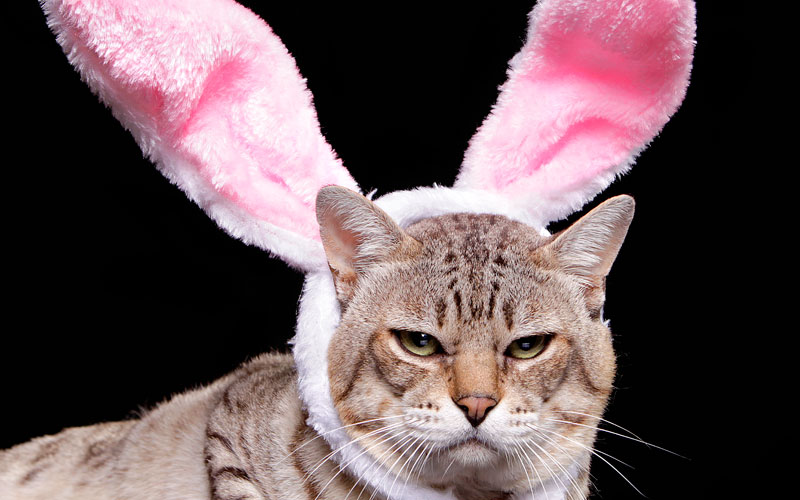 Fun Easter activities for cats