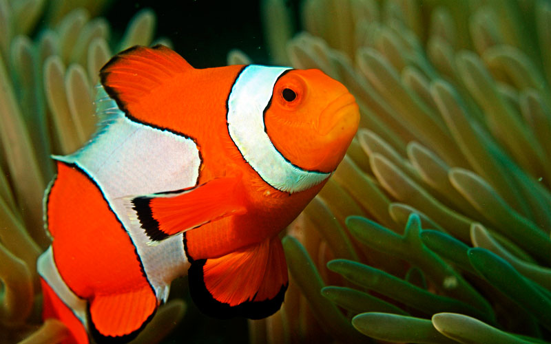 clown-fish-finding-nemo