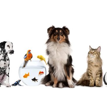 What pet is paw-fect for you?