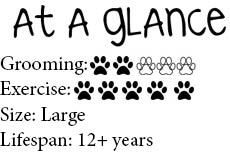 At-a-glance-German-Shorthaired-Pointer