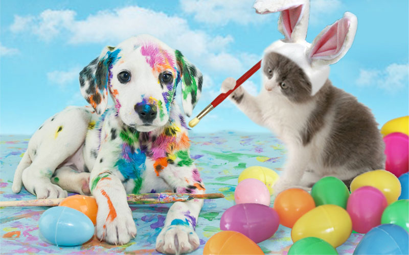 How to keep your pet safe this Easter