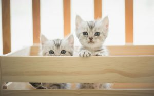 breeding-cats