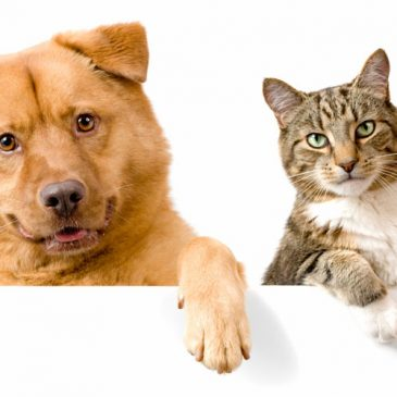 Are you a cat or a dog?