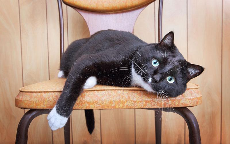 Understanding your cat's secret signals