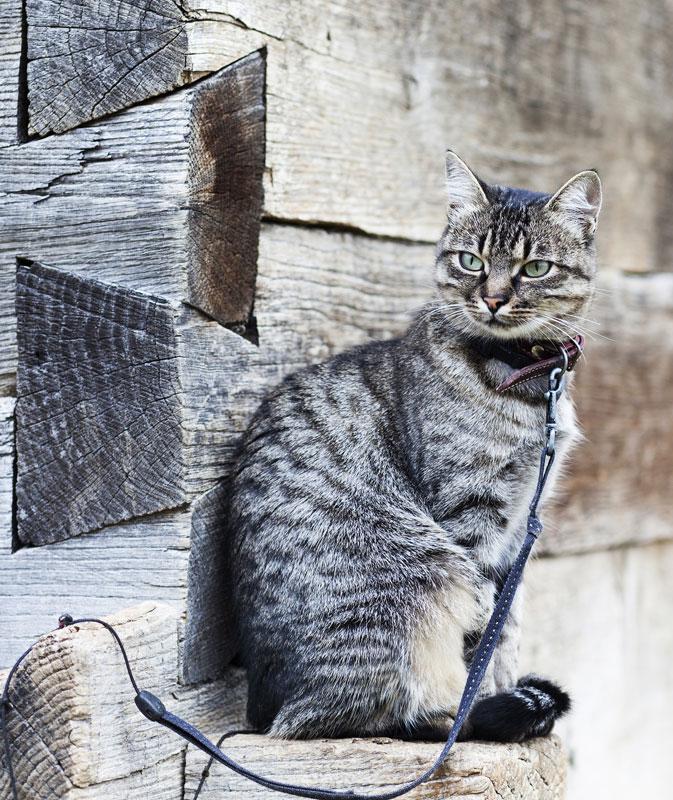 obsessive cat disorder symptoms