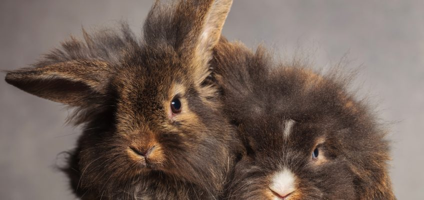 Bunny boot camp: sports you can do with your rabbit