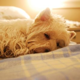 Bedtime stories: do you share the bed with your dog?