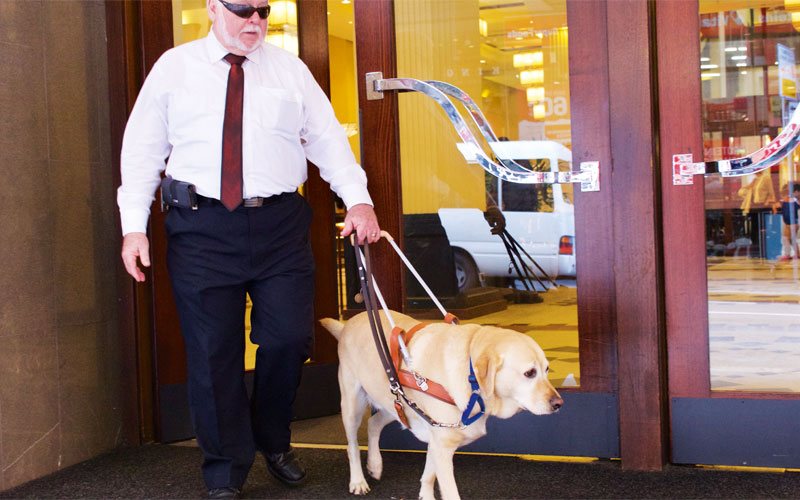 Taking the lead: community education on guide dogs