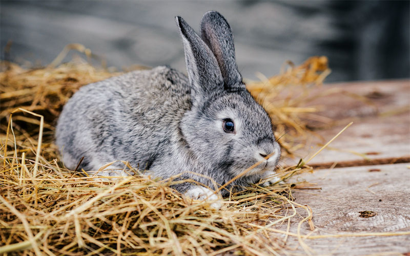 6 ways to help your bunny rabbit stay in shape