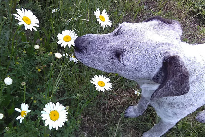3 great ways to enjoy spring with your pets