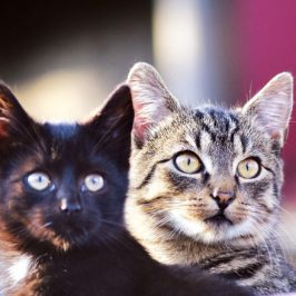 Why two cats are better than one