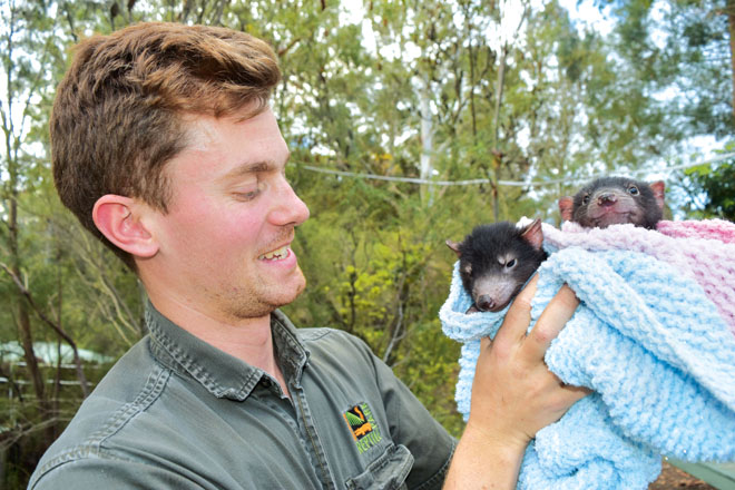 Working with animals: a day in the life of the Australian Reptile Park