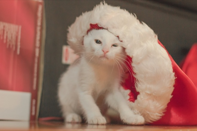 5 fun festive things to do with your pet this Christmas